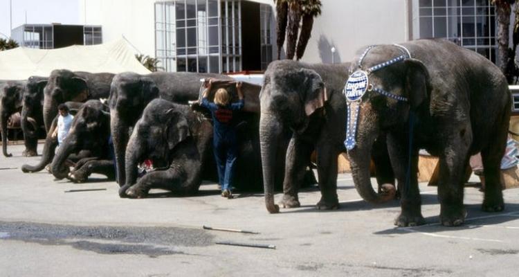 Elephant750